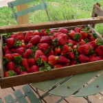 Fresh Fruit from the Yarra valley